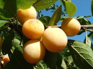 L'action culturelle : juger l'arbre à ses fruits